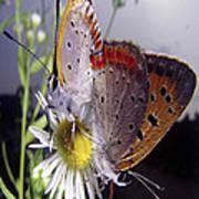Butterfly 002 Art Print