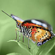Butterfly 008 Art Print