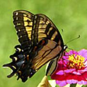 Butterfly 011 Art Print