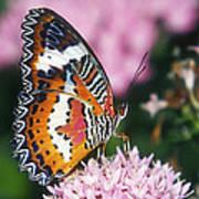 Butterfly 012 Art Print