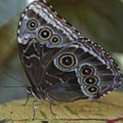 Butterfly 015 Art Print