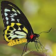 Butterfly 022 Art Print