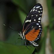 Butterfly 025 Art Print