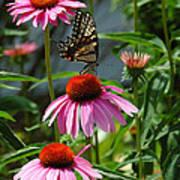 Butterfly 1 2013 Art Print