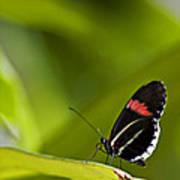 Butterfly 14 Art Print