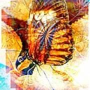 Butterfly 6 Art Print