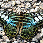 Butterfly Amongst Stones Art Print
