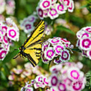 Butterfly And Blooms - Spring Flowers And Tiger Swallowtail Butterfly. Art Print