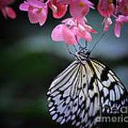 Butterfly And Blossoms Art Print