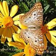 Butterfly And Daisies Art Print