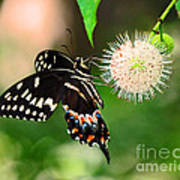 Butterfllies And The Crystal Balls Art Print