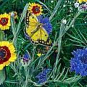 Butterfly And Wildflowers Spring Floral Garden Floral In Green And Yellow - Square Format Image Art Print