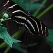Butterfly Art 2 Art Print