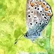 Butterfly Art Prints Art Print