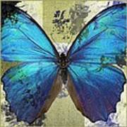 Butterfly Art - S01bfr02 Art Print by Variance Collections