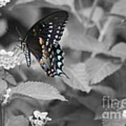 Butterfly Art Wings Together Art Print