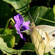 Butterfly At Flower Art Print