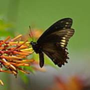 Butterfly Away Art Print
