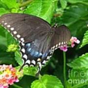 Butterfly Ballot Art Print