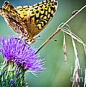 Butterfly Beauty And Little Friend Art Print