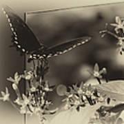 Butterfly Black 06 In Heirloom Finish Art Print