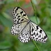 Butterfly Charm Art Print
