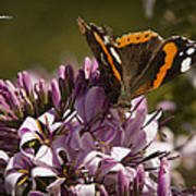 Butterfly Close Up Art Print