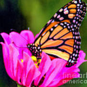 Butterfly Cup Art Print
