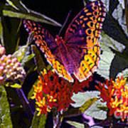 Butterfly Don't Fly Away Art Print