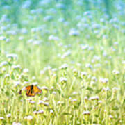 Butterfly Dreams Print by Holly Kempe