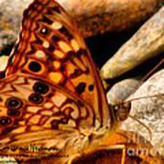 Butterfly Enchantment Art Print