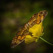 Butterfly Fan Art Print