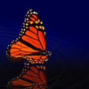 Butterfly Floats Art Print