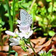 Butterfly Flower Art Print