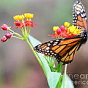 Butterfly Flower - Gossamer Wings Embrace Candy Blossoms Art Print