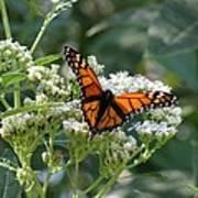Butterfly Garden - Monarchs 09 Art Print
