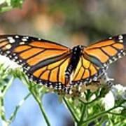Butterfly Garden - Monarchs 13 Art Print