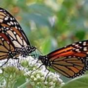 Butterfly Garden - Monarchs 17 Art Print