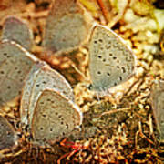 Butterfly Gathering Art Print