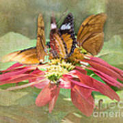 Butterfly Gathering Art Print