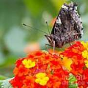 Butterfly Hanging Out On Wildflowers Art Print