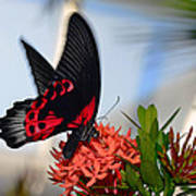 Butterfly In Action Art Print