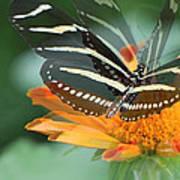 Butterfly In Motion #1968 Art Print