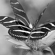 Butterfly In Motion Art Print
