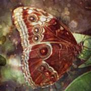 Butterfly In My Garden Art Print