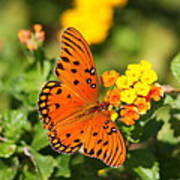 Butterfly In The Glades - Gulf Fritillary Art Print