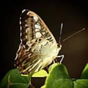 Butterfly In The Light Art Print
