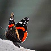 Butterfly Landing Art Print