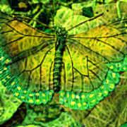 Butterfly Mimetism Art Print by Jo Ann