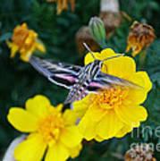 Butterfly Moth Art Print
